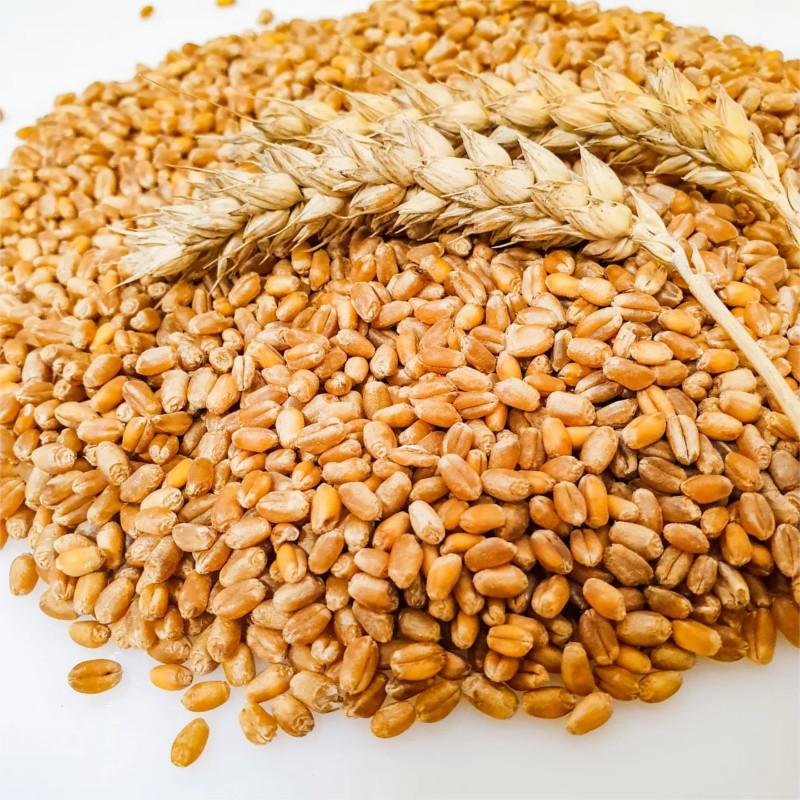 Weizenkörner   1 kg