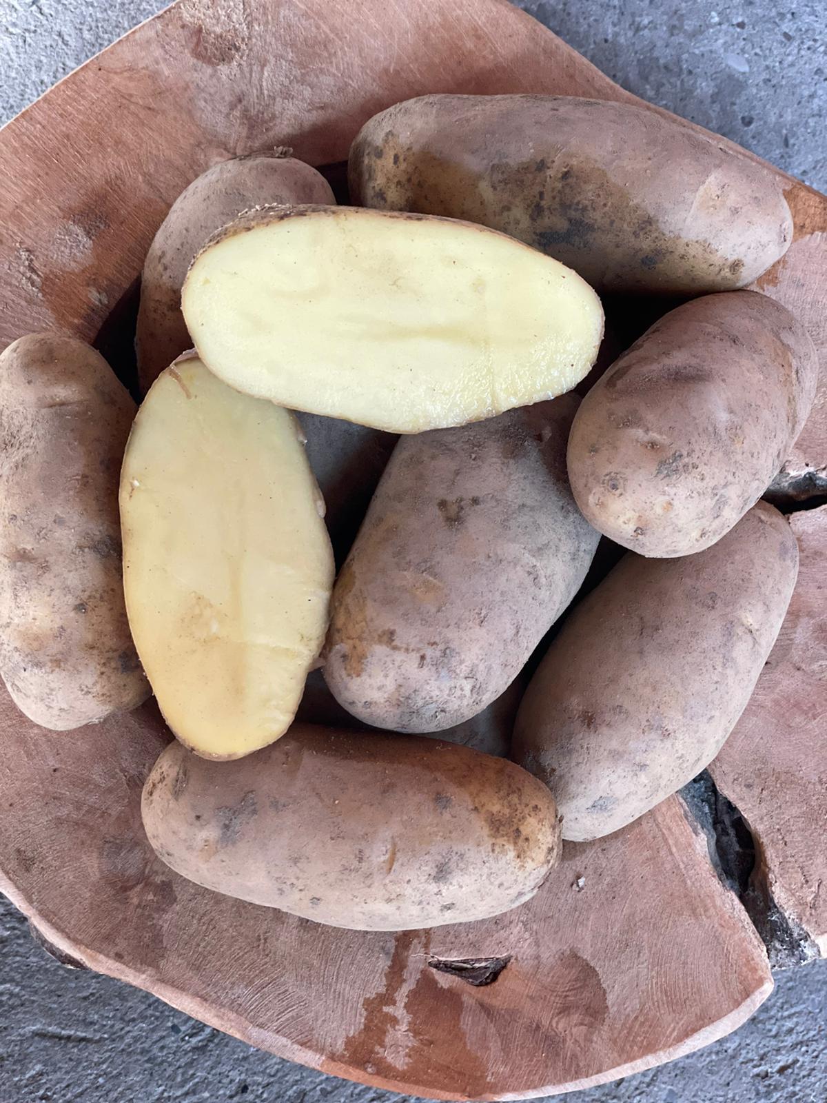 Speisekartoffeln - Bellinda - festkochend | 1,5 kg