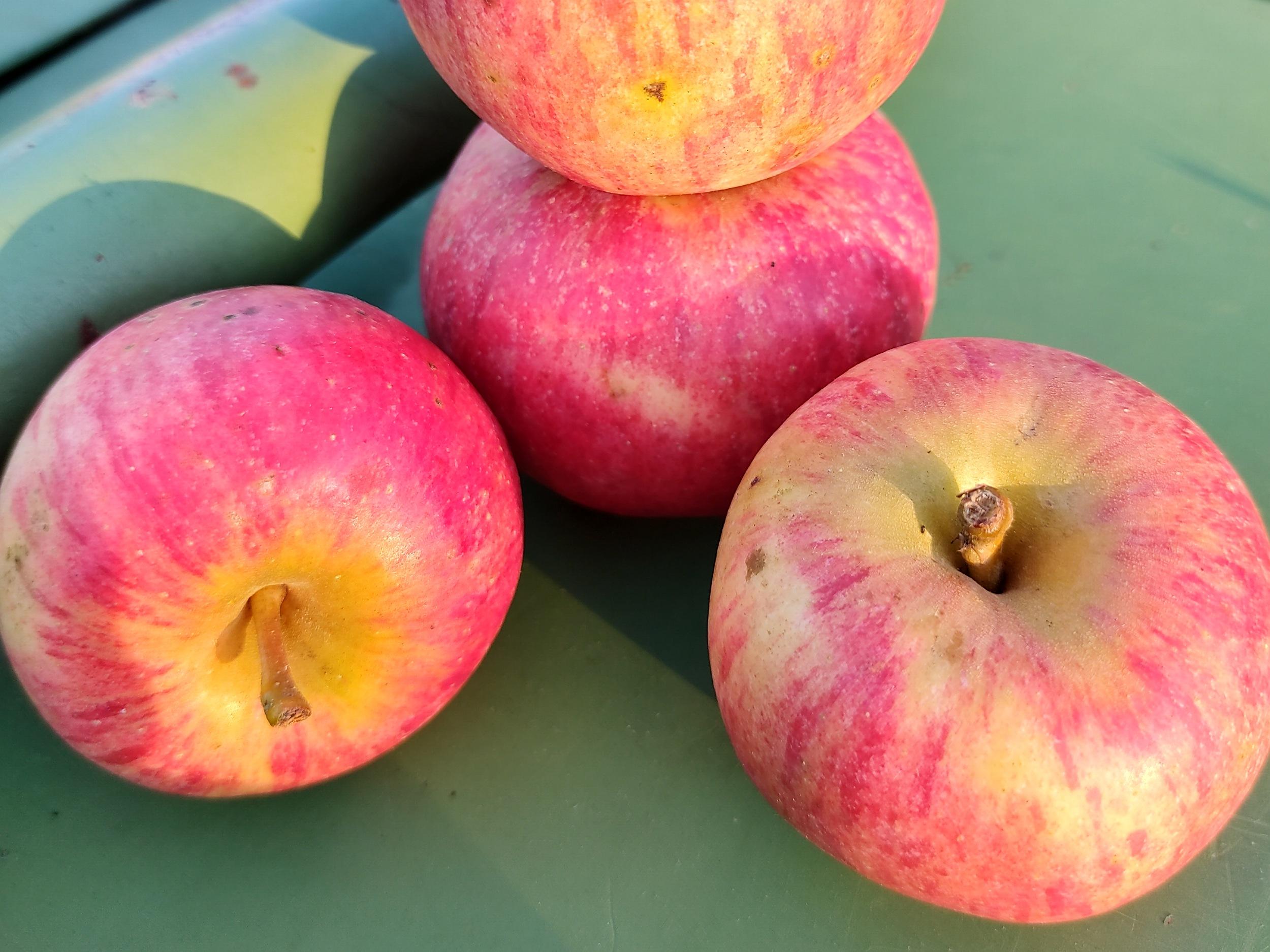 Äpfel - Elstar | 1,5 kg